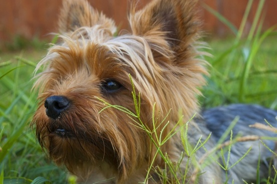 animal canine curiosity cute daytime dog domestic
