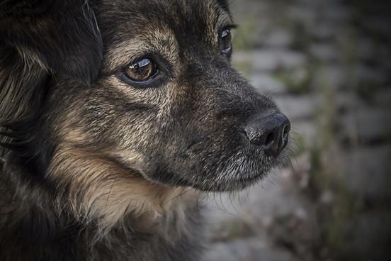 animal canine cute daytime dog eyes fur hair head