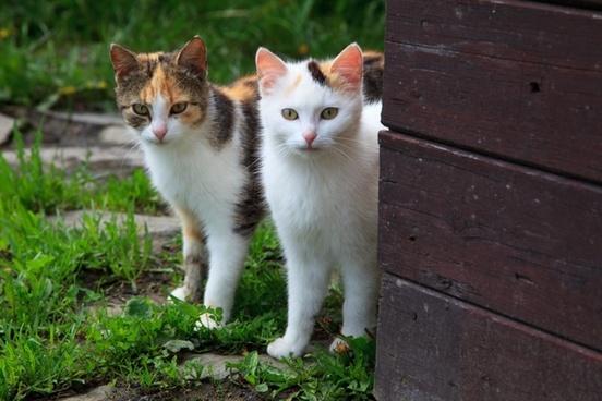 animal cat couple