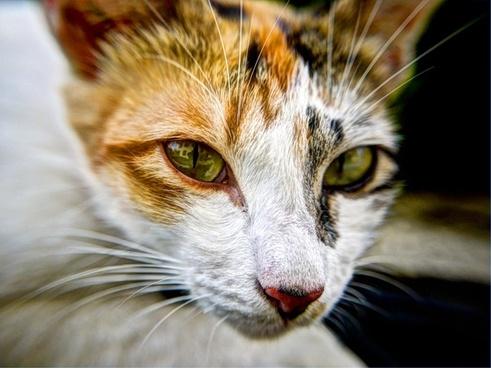 animal cat cute domestic eyes feline funny fur