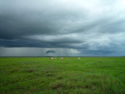 animal cloud cow eating farm field grass sky storm