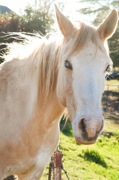 animal color equestrian equine farm field grass