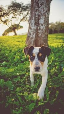 animal cow curiosity cute dog domestic farm field
