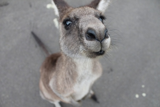 animal curiosity cute daytime down fur grey