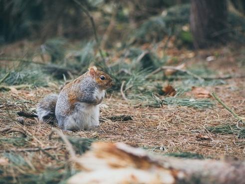 animal cute eyes feeding forest fox fur grass grey