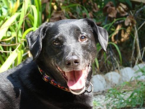 animal dog happy