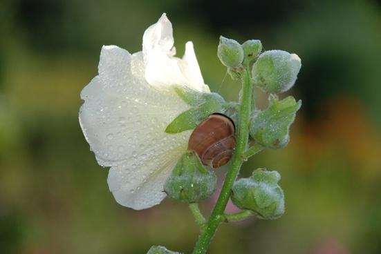 animal flower bouquet