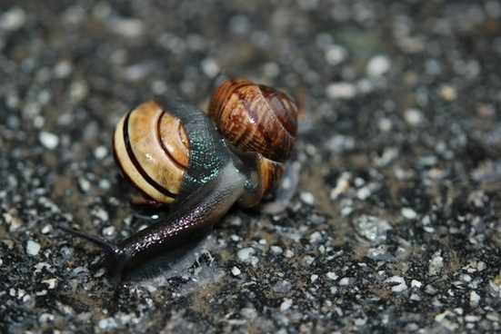 animal nature snail