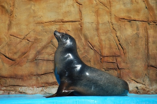 animal sea lion zoo