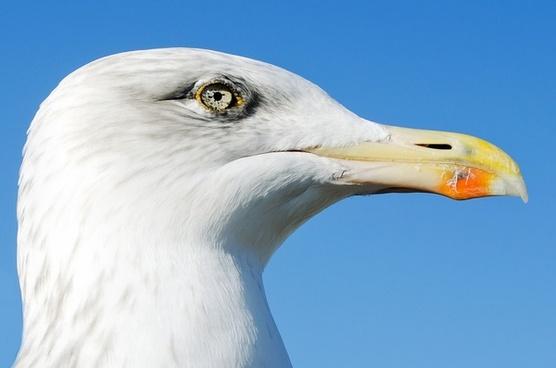 animals background beak