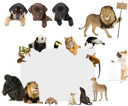 animals billboards definition picture