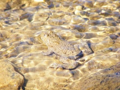 animals wildlife animals frogs