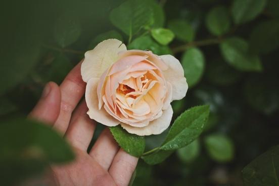 anniversary bloom bouquet decoration delicate flora
