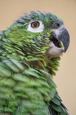 another green bird