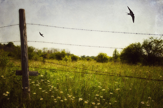 another meadow moment