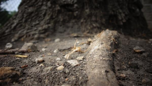 ant asphalt broken dirt dirty earth floor ground