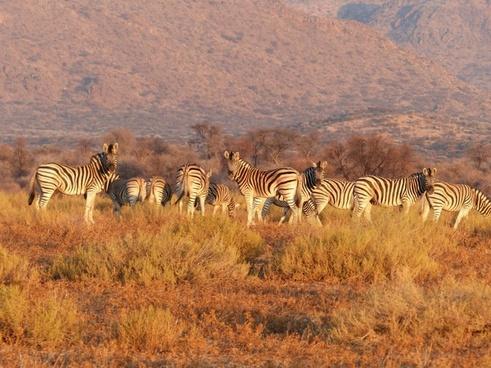 antelope bush daytime grass grassland herd landscape