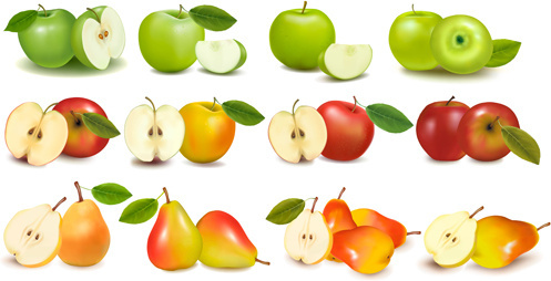 apple and pears slice vector