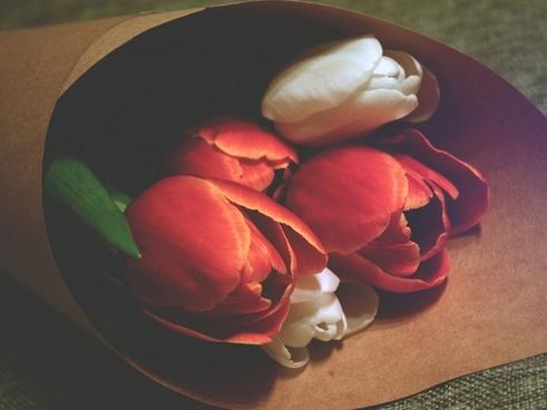 apple bowl cherry color cup flower food fruit