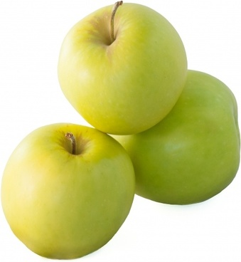 apple the apples the fruit of the