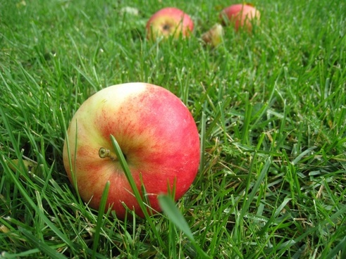 apples grass fall fruit