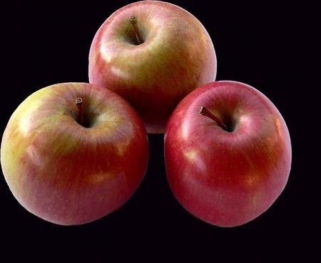 apples plant fruit
