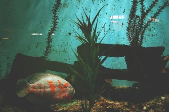 aquarium color coral fish garden invertebrate kelp