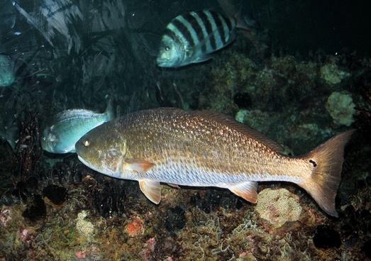 aquarium fish 2