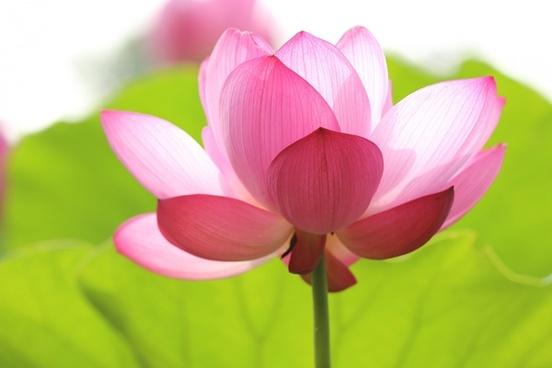aquatic bloom blossom bright closeup color flora