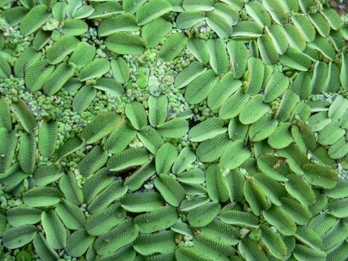 aquatic plant plant nature