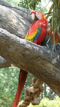 ara parrot plumage