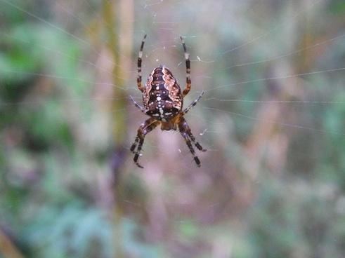 arachne spider network