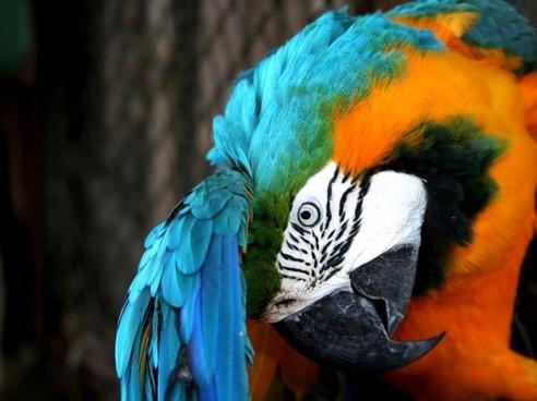arara bird parrot
