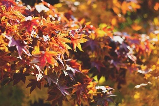 arboretum autumn blur bright change color