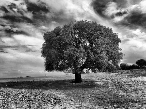 arbre segarra