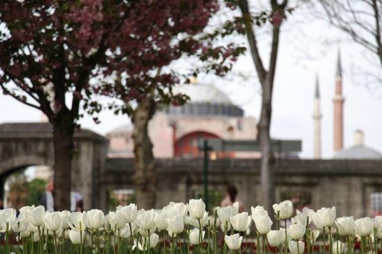 architecture cemetary cemetery city cross flower