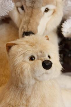 arctic baby wolf