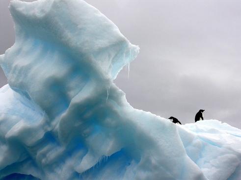 arctic cold color frozen glacier ice iceberg love