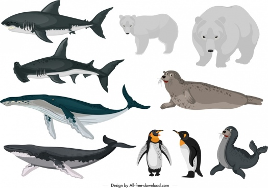 arctical animals icons fishes bears penguin seal sketch