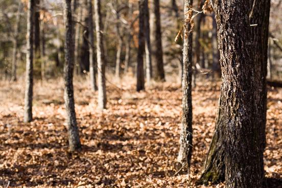 arkansas woods