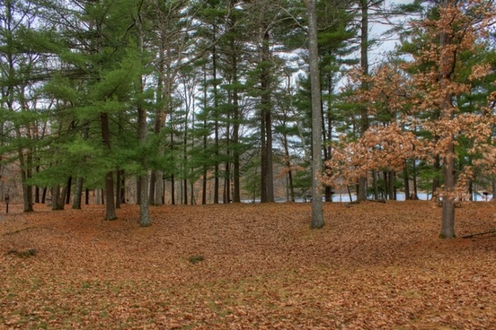 around the picnic area at hartman creek state park wisconsin