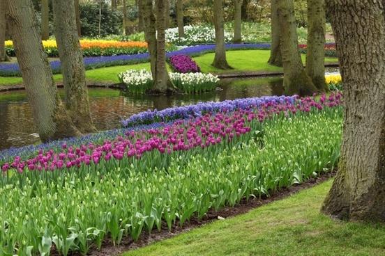 arrangement beautiful bloom