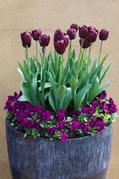 arrangement bloom blossom