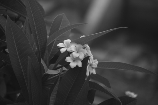 art black and white bloom blossom child fleur flora