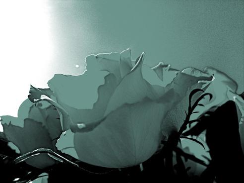 artful rose