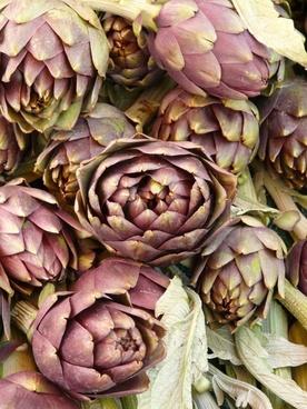 artichokes vegetables plant