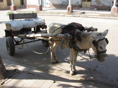 asmara eritrea donkey