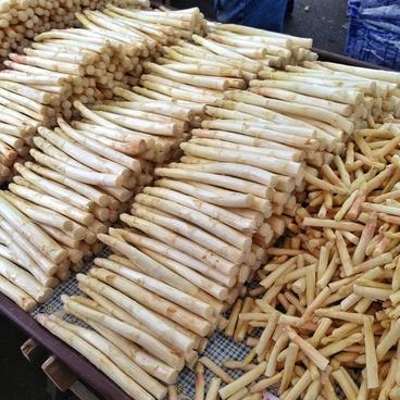 asparagus time asparagus vegetables