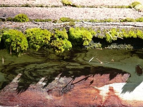 asphalt shindles moss covered