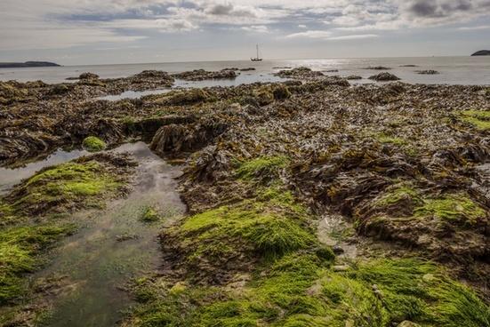 atlantic beach coast coastal cornwall grass